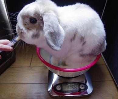 Weight1168