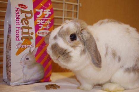 Petit_rabbit_food