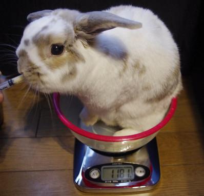 Weight1181g
