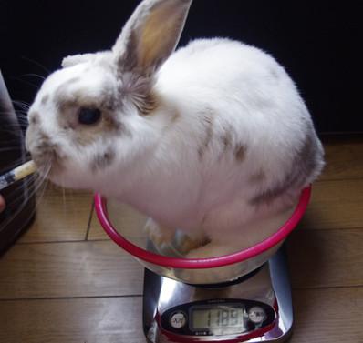 Weight1189g